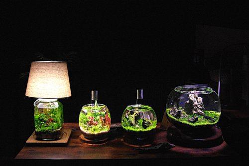~小さなボトルに自然を再現~ 『Nature-ボトルアクアリウム』教室